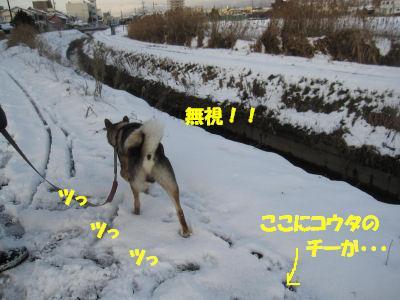 f0143123_20313736.jpg