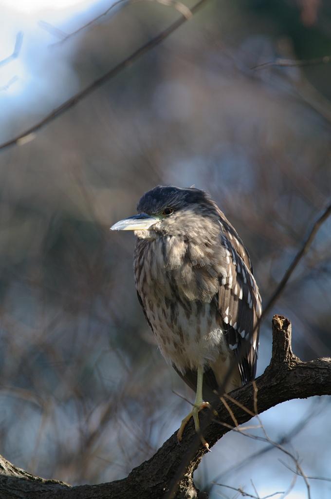 冬至鳥_d0123171_1617787.jpg