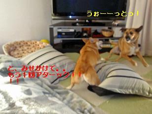 a0132275_1727527.jpg