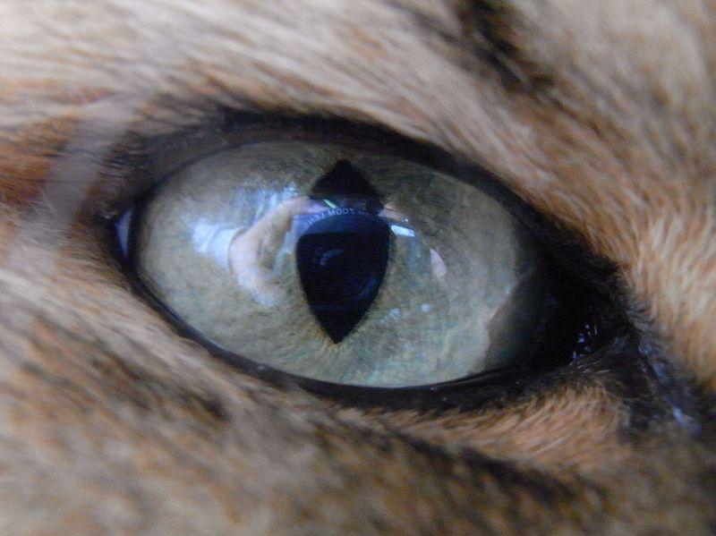 ネコの目に映るもの_c0025115_22471387.jpg