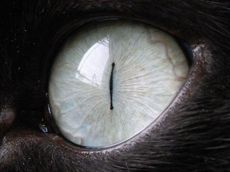 ネコの目に映るもの_c0025115_2251118.jpg