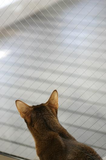 [猫的]メダカのご飯_e0090124_85314.jpg