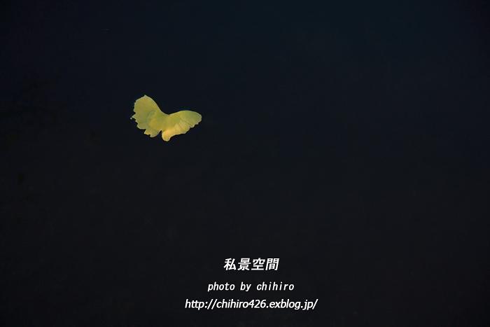 c0135535_21205771.jpg