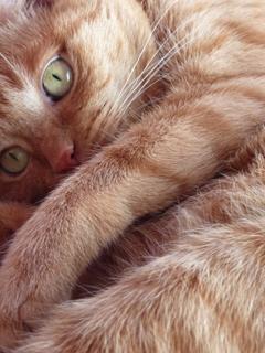 初雪の恋猫 空しぇるのぇる編。_a0143140_23145322.jpg