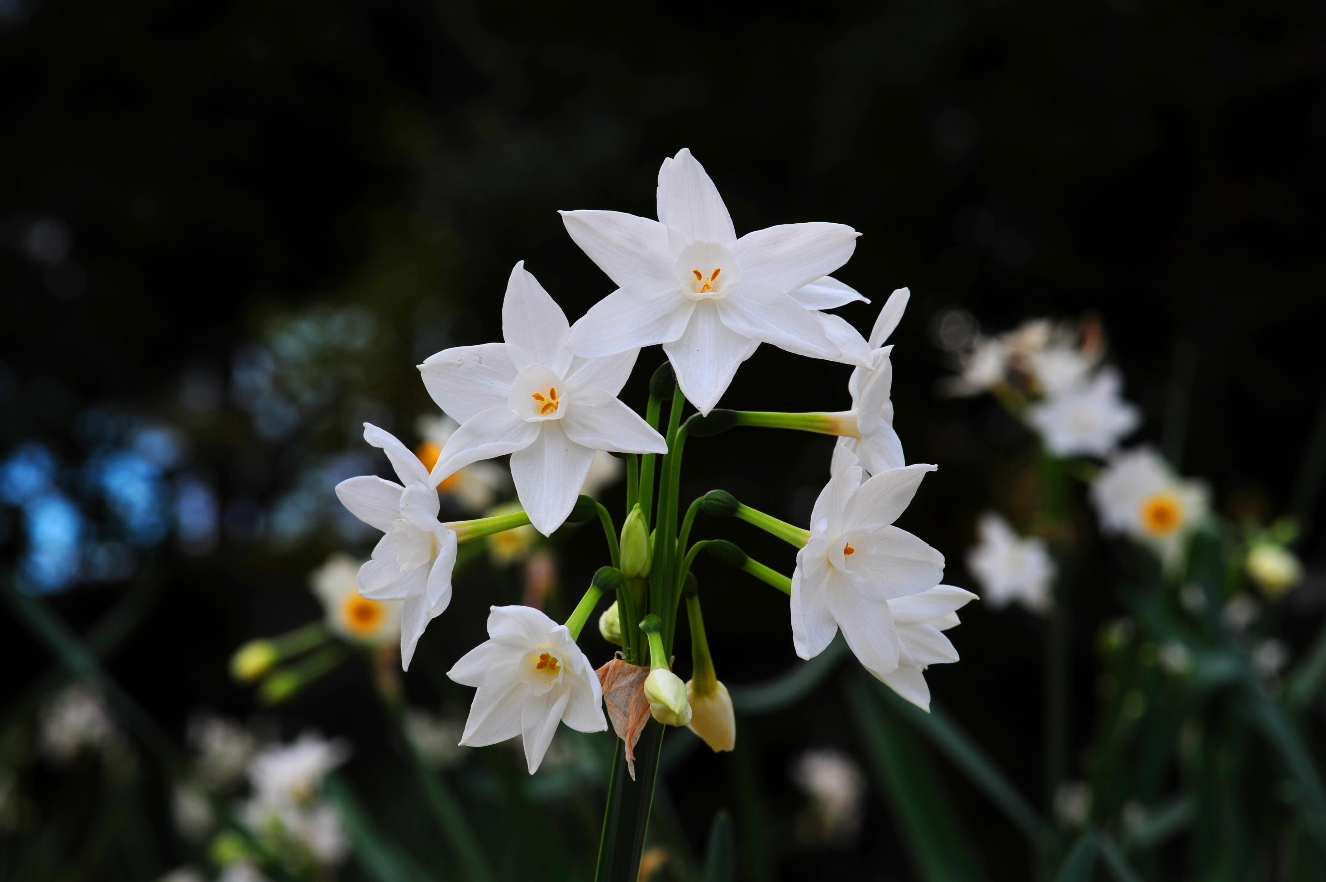 白い花_e0157647_21344975.jpg