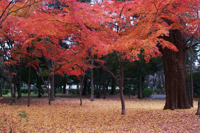 最後の紅葉(京都御所)_f0155048_22462528.jpg