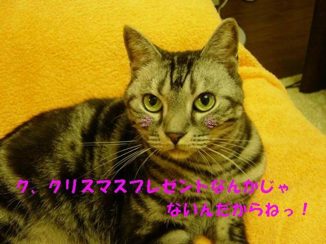 b0009379_15251464.jpg