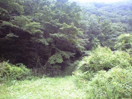 四国の鉄道 6_b0005281_23491466.jpg
