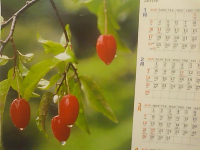 2010年上期のカレンダー_e0068696_18192751.jpg