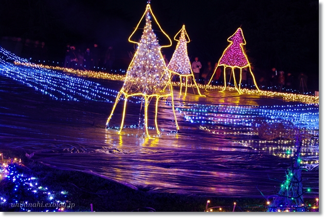 Merry Christmas♪ 海のイルミネーション_f0179404_23185228.jpg