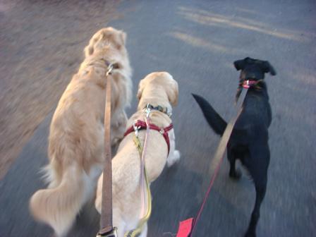 市の迷子犬保護広報期限が終了_f0064906_176255.jpg