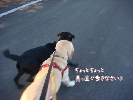 市の迷子犬保護広報期限が終了_f0064906_1765427.jpg