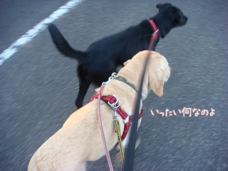 市の迷子犬保護広報期限が終了_f0064906_1771949.jpg