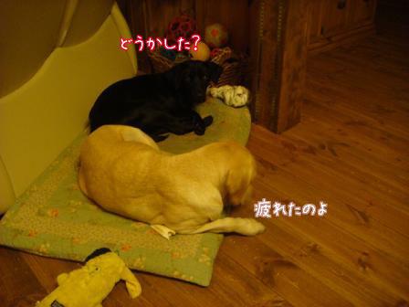 市の迷子犬保護広報期限が終了_f0064906_1775138.jpg