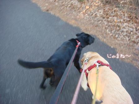 市の迷子犬保護広報期限が終了_f0064906_177684.jpg