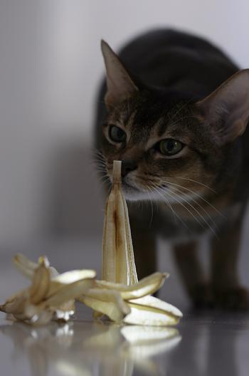 [猫的]イヴの落とし物_e0090124_7455041.jpg