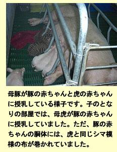 タイで不妊指導、ワニ・トラ園見学記_a0148348_4274573.jpg