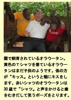 タイで不妊指導、ワニ・トラ園見学記_a0148348_429051.jpg
