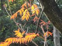 H21年12月度植物調査_c0108460_2025958.jpg