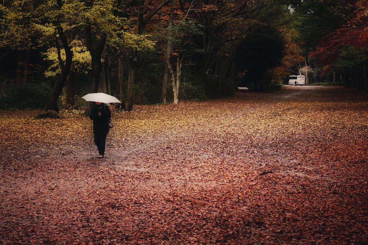 京都 糺の森  1_f0021869_1192616.jpg
