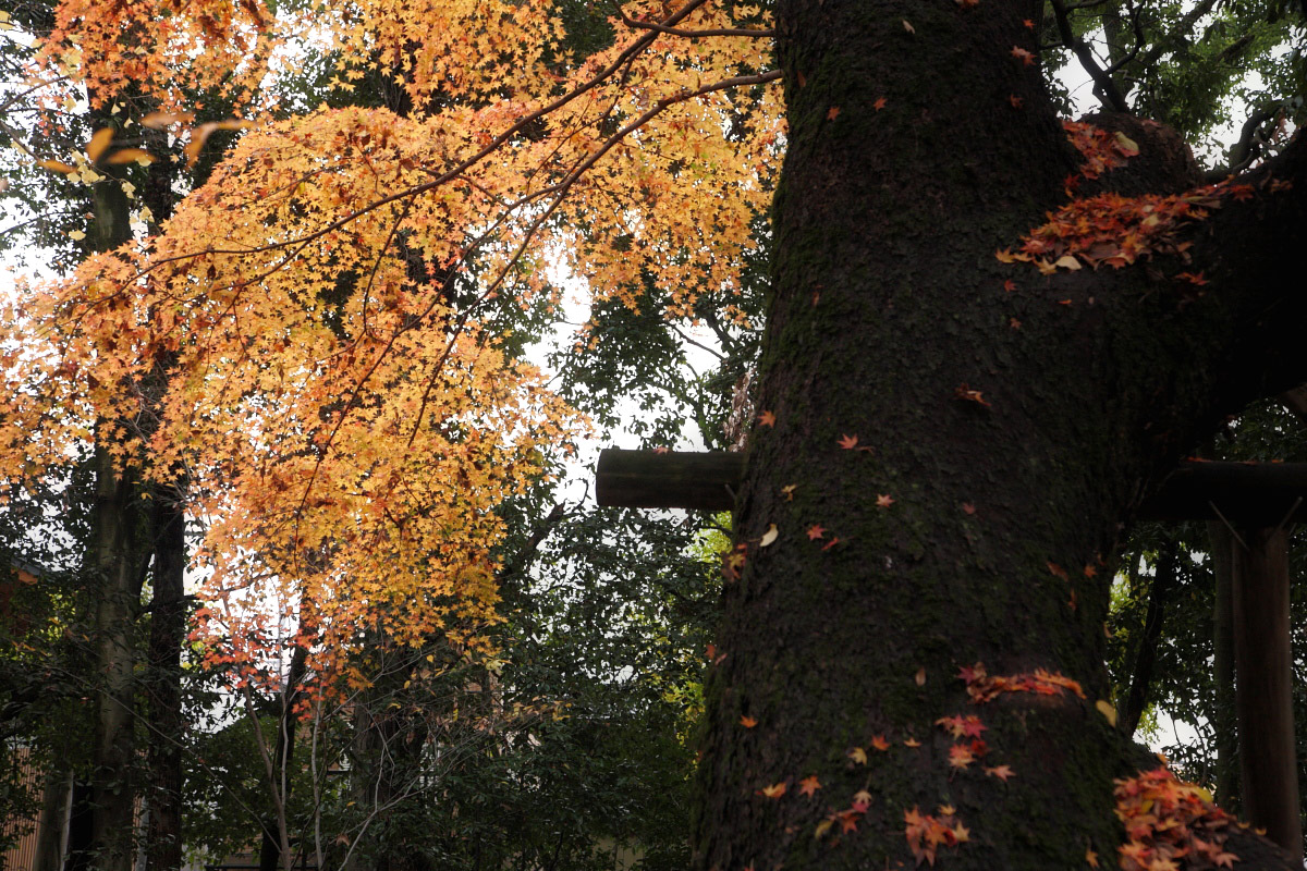 京都 糺の森  1_f0021869_127398.jpg