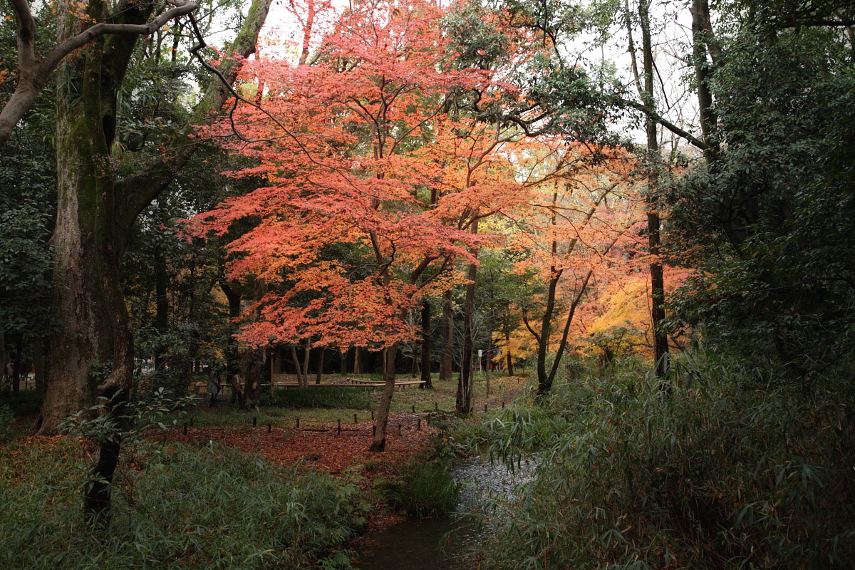 京都 糺の森  1_f0021869_1284985.jpg