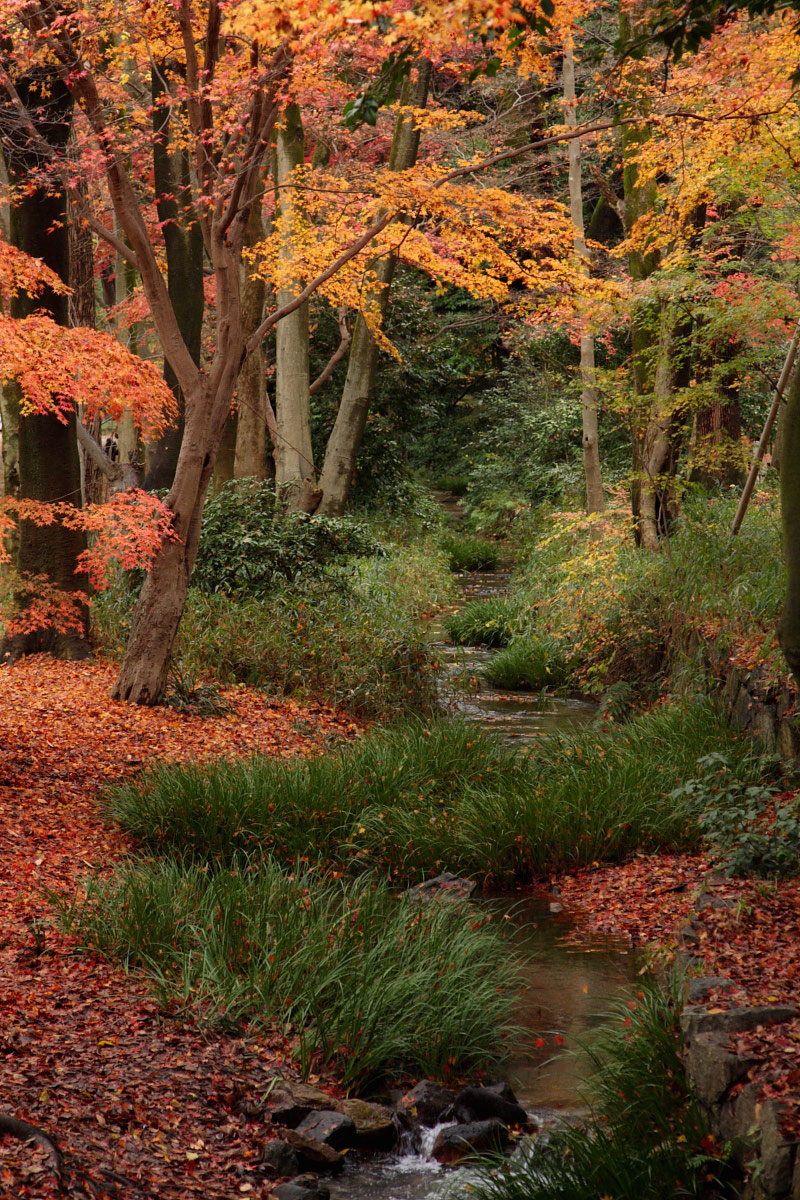 京都 糺の森  1_f0021869_1315621.jpg