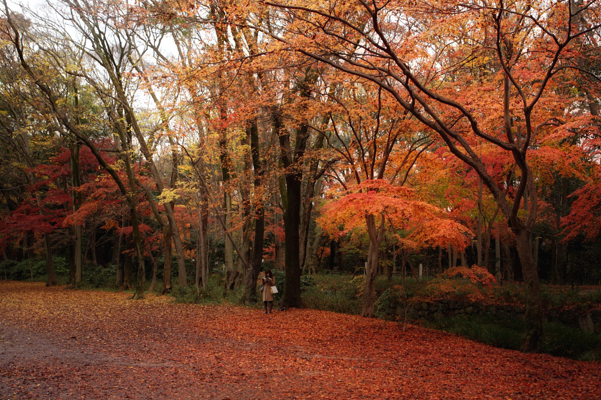 京都 糺の森  1_f0021869_1584514.jpg