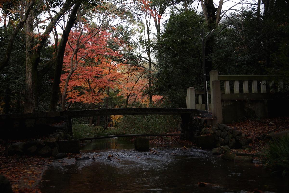 京都 糺の森 2_f0021869_22364756.jpg