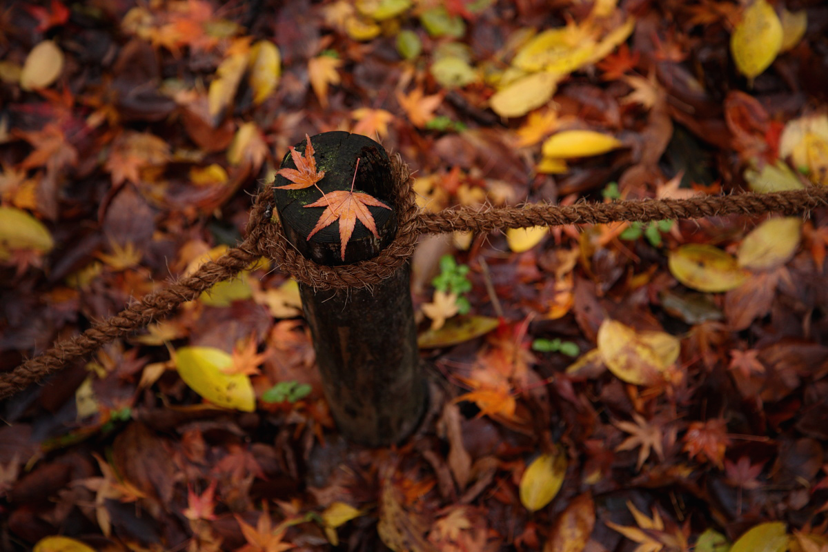 京都 糺の森 2_f0021869_22375821.jpg