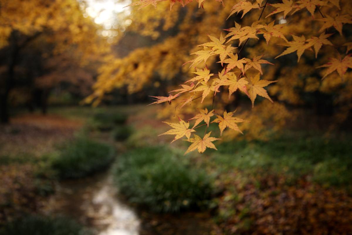 京都 糺の森 2_f0021869_22392236.jpg