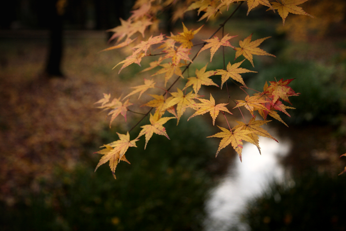 京都 糺の森 2_f0021869_22393587.jpg