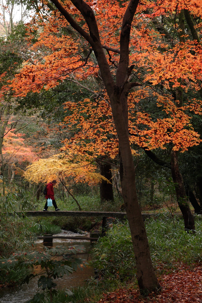 京都 糺の森 2_f0021869_2242519.jpg