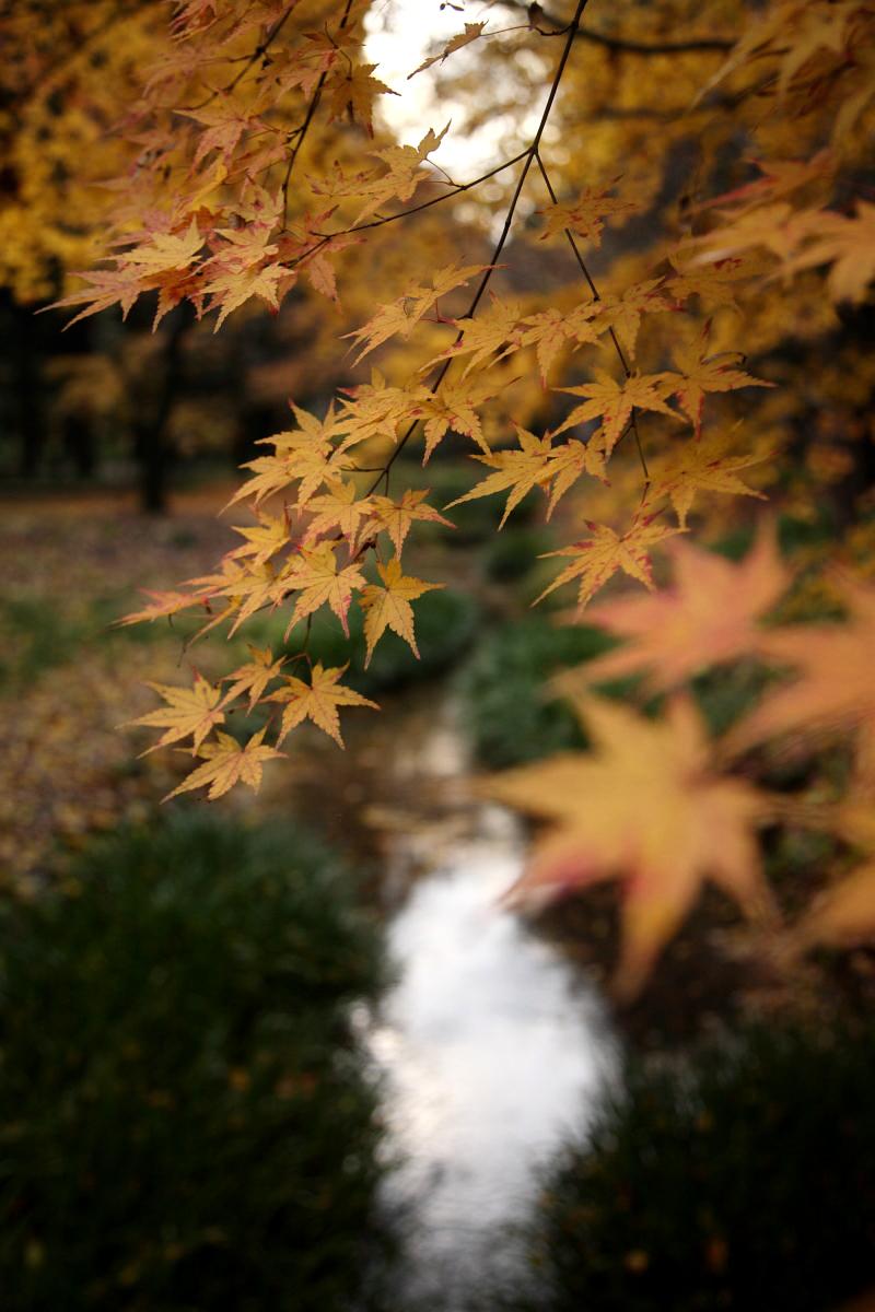 京都 糺の森 2_f0021869_22431736.jpg