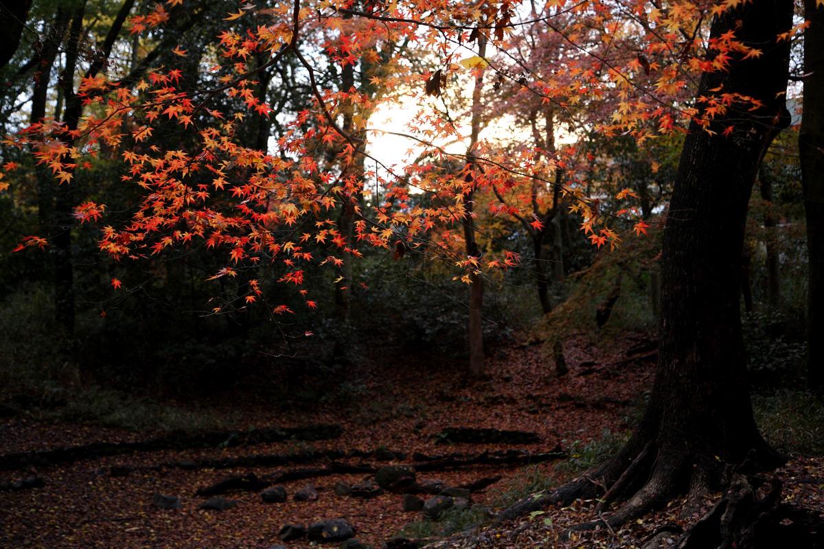 京都 糺の森 3_f0021869_22595669.jpg