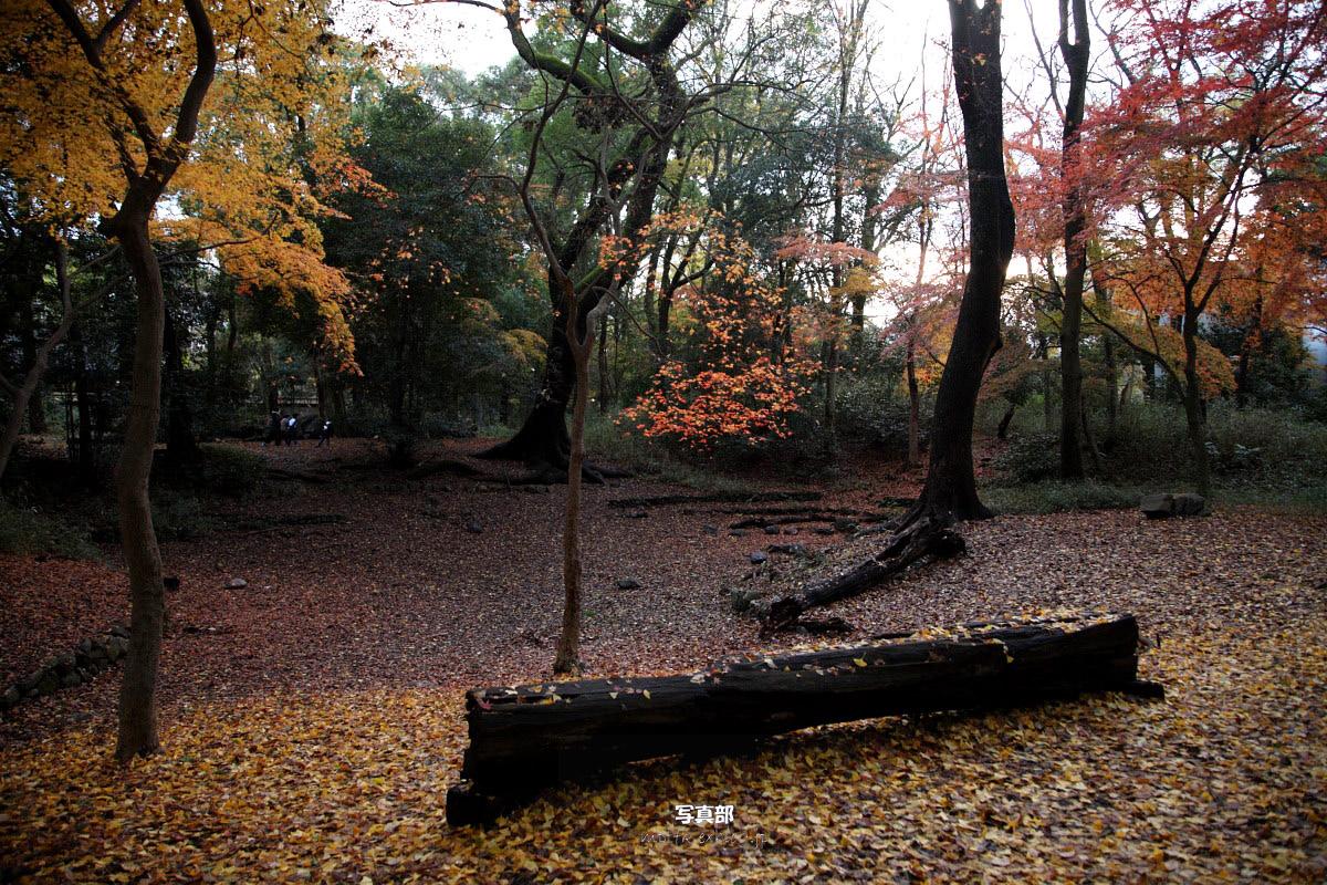 京都 糺の森 3_f0021869_2311257.jpg