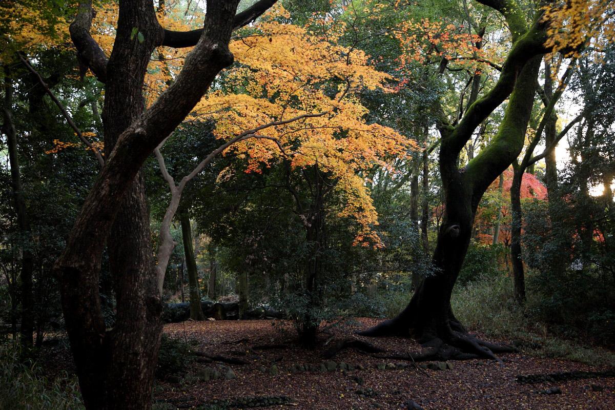 京都 糺の森 3_f0021869_2312244.jpg
