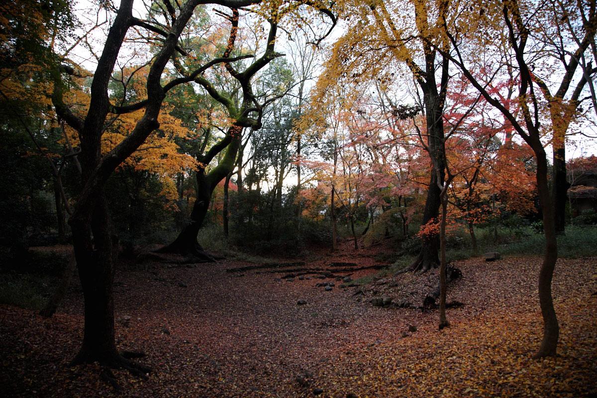 京都 糺の森 3_f0021869_231361.jpg