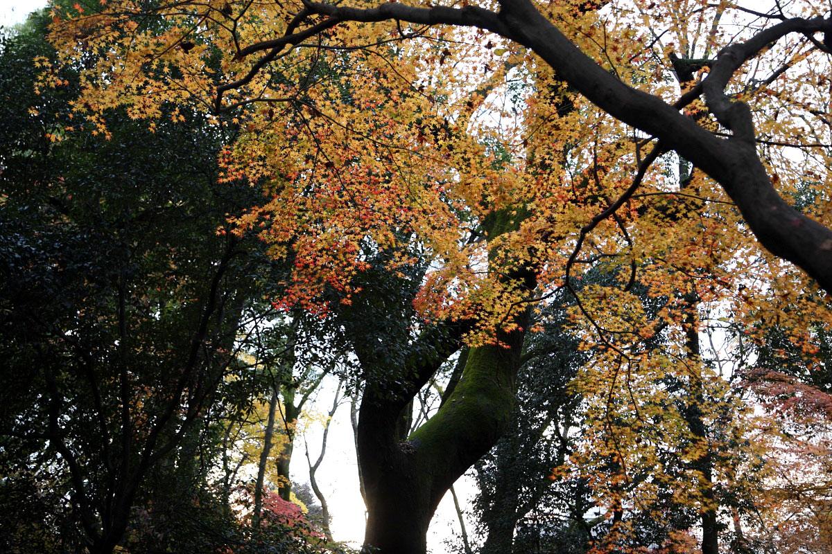 京都 糺の森 3_f0021869_23138100.jpg