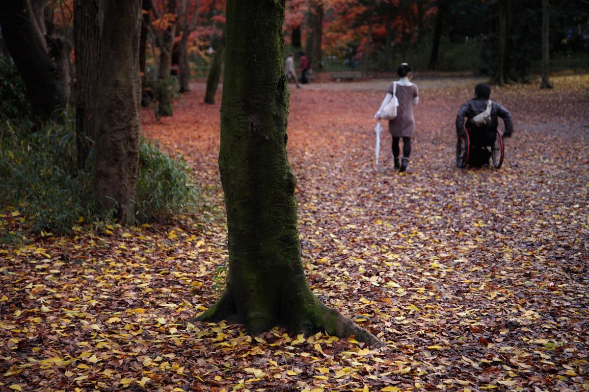 京都 糺の森 3_f0021869_2332958.jpg