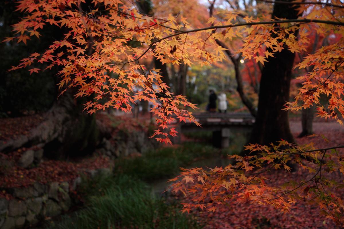 京都 糺の森 3_f0021869_2334645.jpg