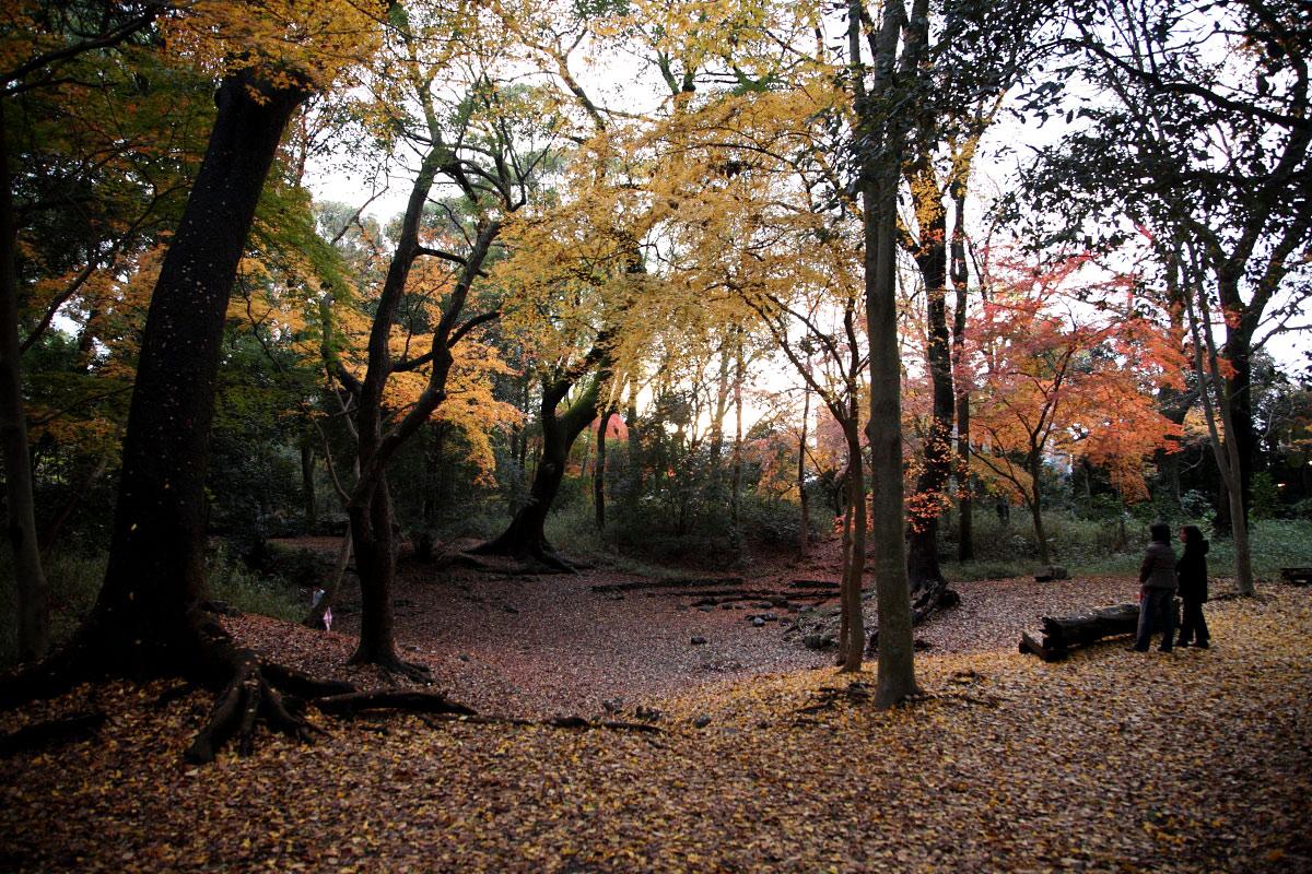 京都 糺の森 3_f0021869_233647.jpg