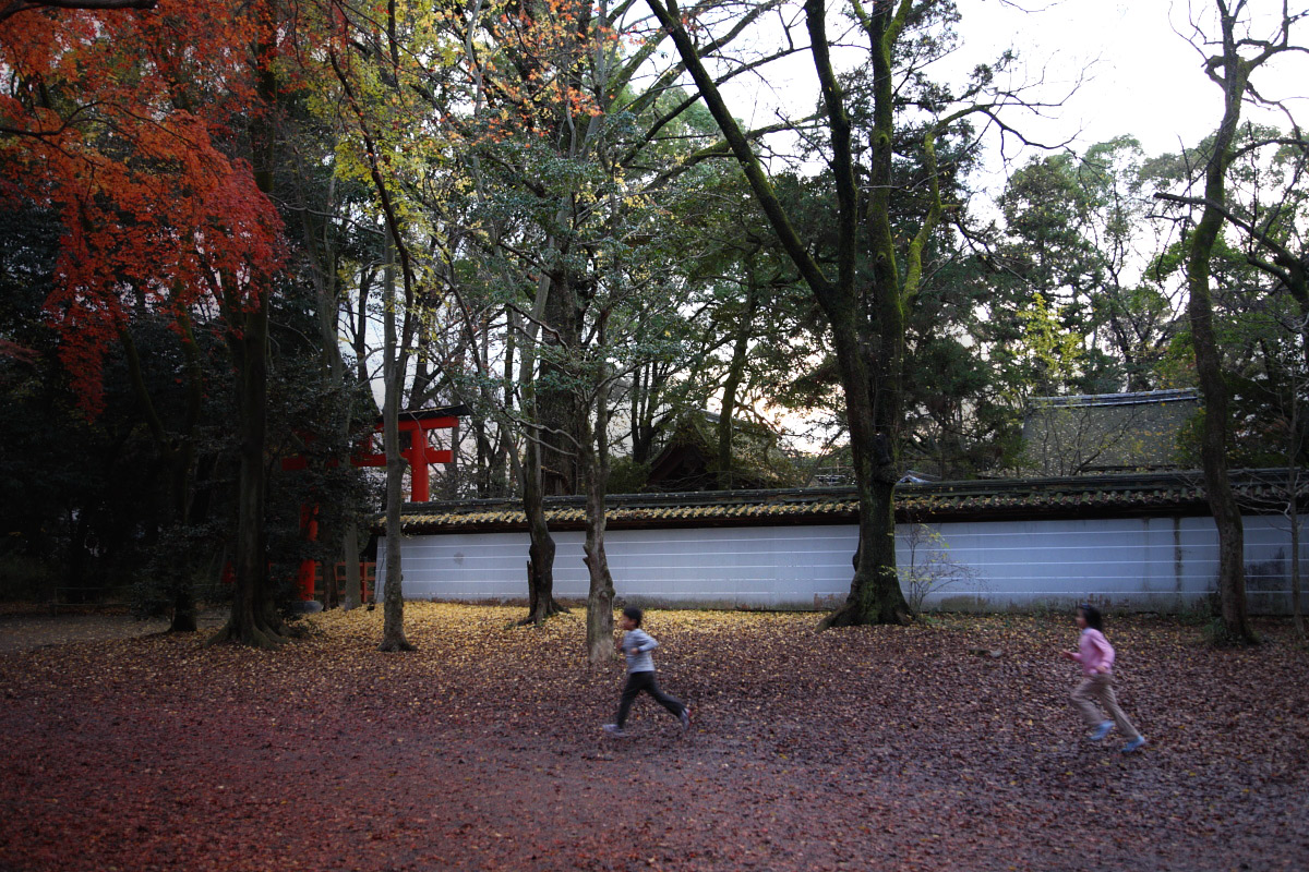 京都 糺の森 3_f0021869_234072.jpg