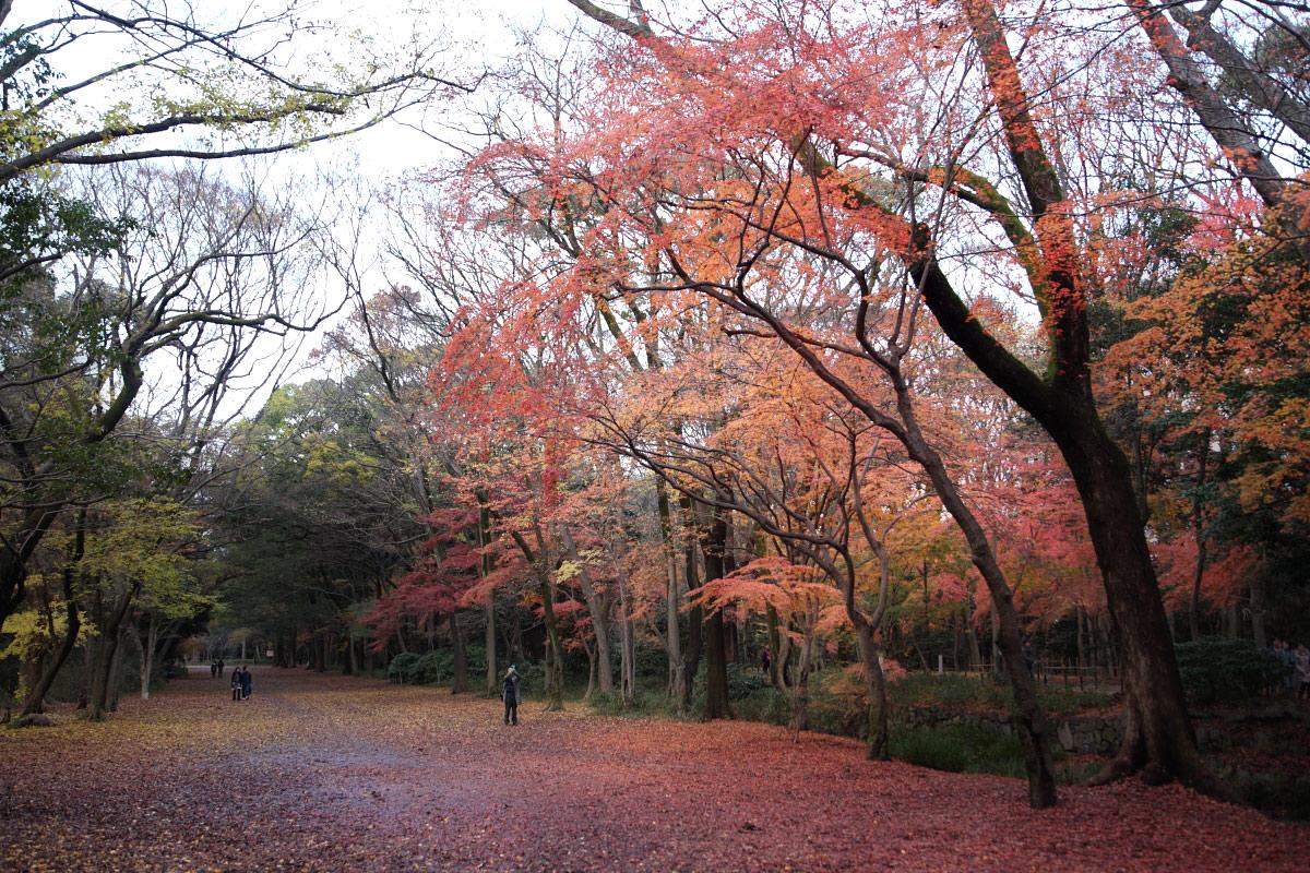 京都 糺の森 3_f0021869_235250.jpg