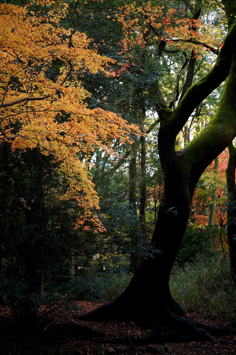 京都 糺の森 3_f0021869_2371492.jpg