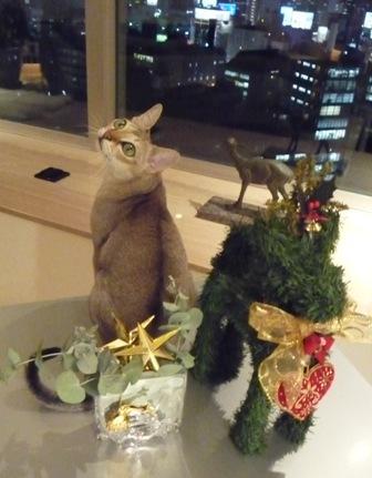 Joyeux Noel! メリークリスマス!_a0138976_18245739.jpg
