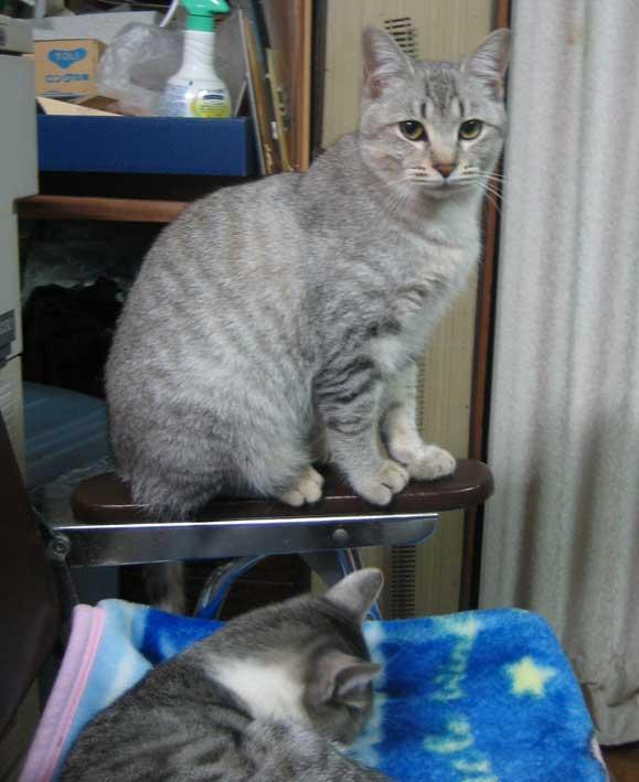 霜化粧_b0057679_9254038.jpg