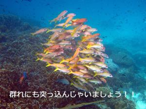 革命社長の初☆体験ダイビング_f0144385_20221142.jpg