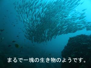 ぴぴっとピピ島!_f0144385_5175710.jpg