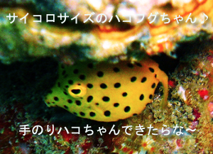 ぴぴっとピピ島!_f0144385_5184195.jpg